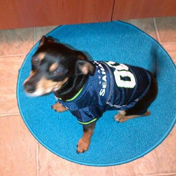 ... Seattle Seahawks Dog Jersey with Same Day Shipping BaxterBo ... e481fd576