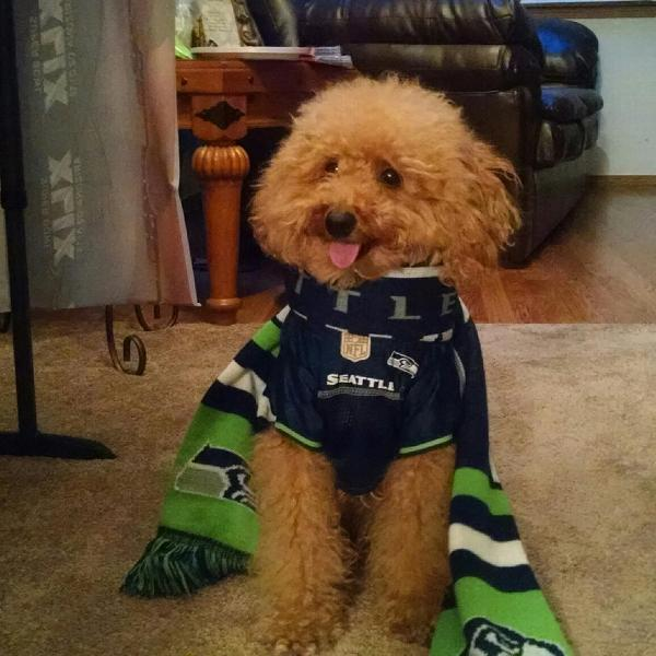 Hamlet seattle seahawks dog jersey Seattle Seahawks Dog Jersey with Same  Day Shipping BaxterBo ... a5f239722