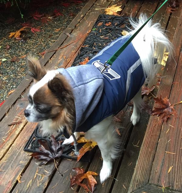 Seattle Seahawks Dog Puffer Vest Customer Photos - Send us your photo! Riki b02df983b
