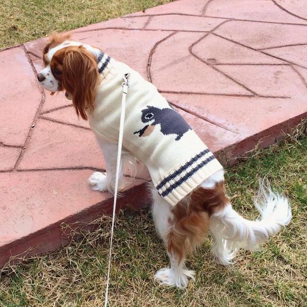 Fab Dog Knit Turtleneck Dog Sweater Squirrel