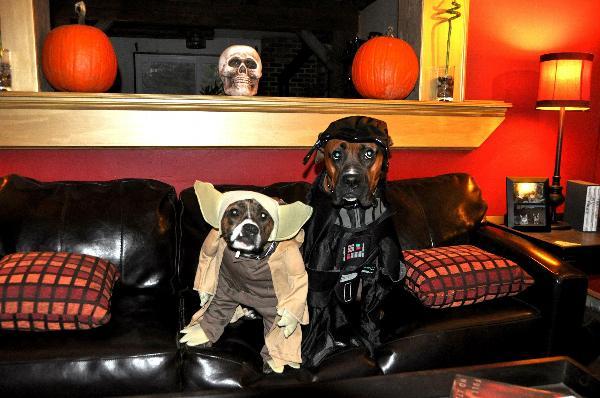 Star Wars Darth Vader Dog Halloween Costume with Same Day Shipping ...