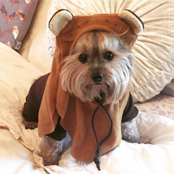 Star Wars Ewok Dog Costume Baxterboo