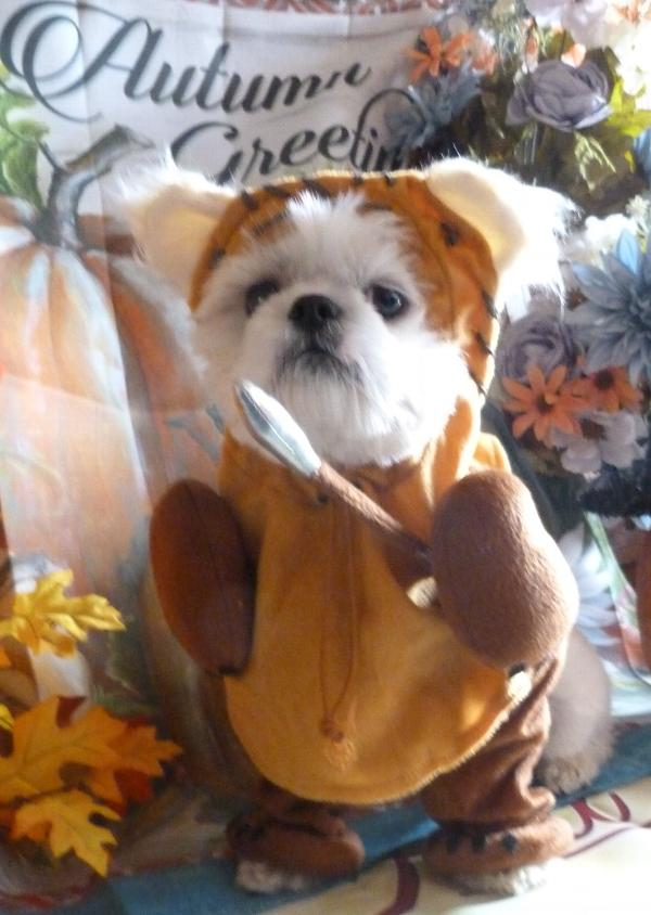 3cdad3cf6cb Star Wars Ewok Dog Costume | BaxterBoo