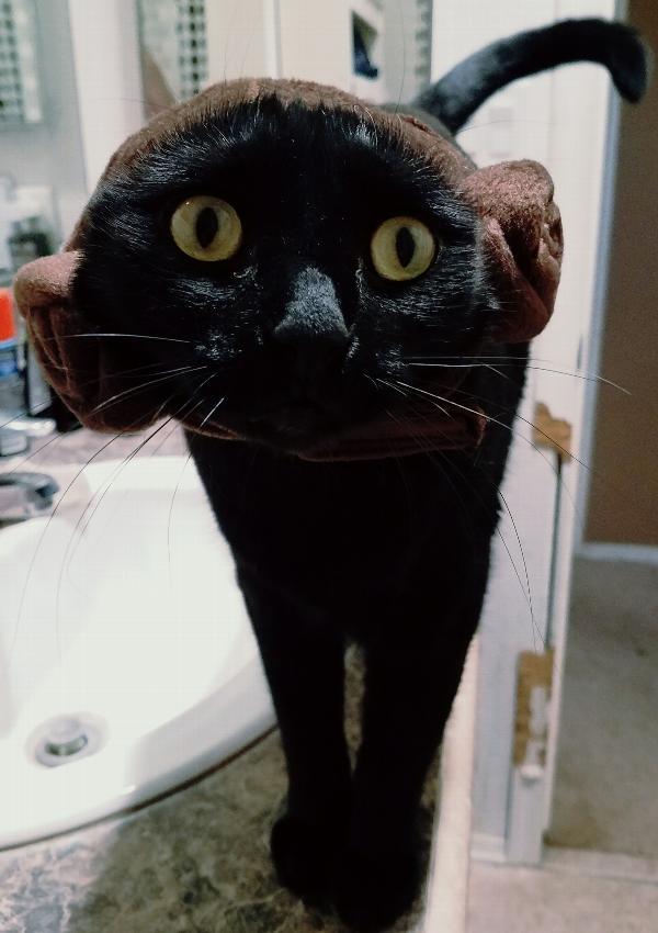 Lucky Cat Halloween Costume