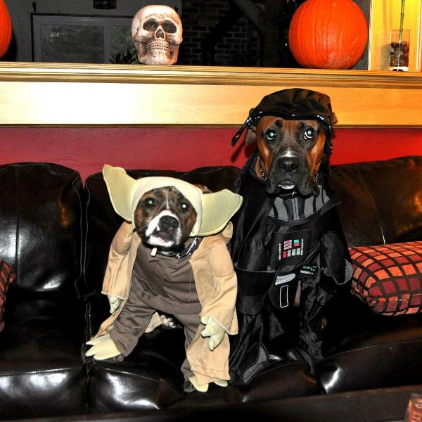 star wars yoda dog halloween costume customer photos send us your photo sprocket ratchet