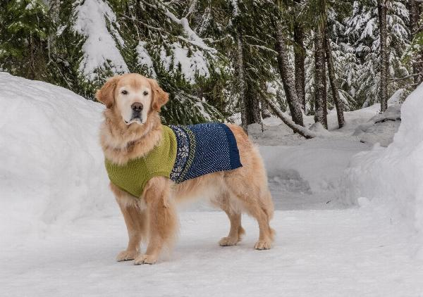 Stormy's Snowflake Fair Isle Dog Sweater - Green and Navy with ...