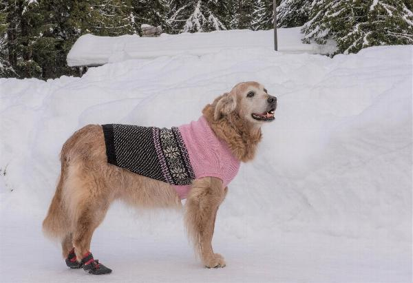 Stormy's Snowflake Fair Isle Dog Sweater - Pink and Black with ...