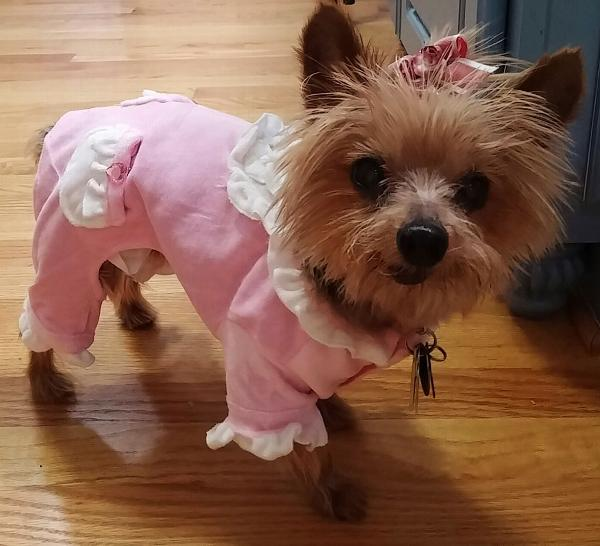 Sweety Dog Jumper Pajamas By Hip Doggie Baxterboo