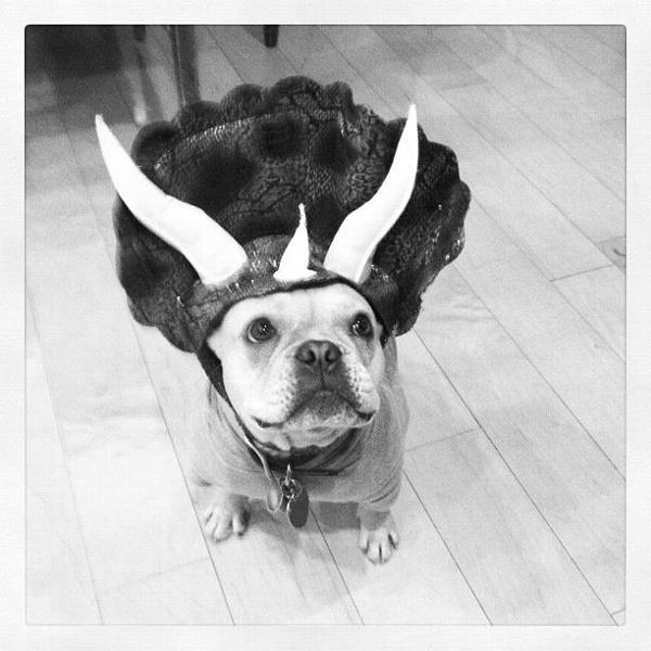Hank & Triceradog Dog Costume with Same Day Shipping | BaxterBoo