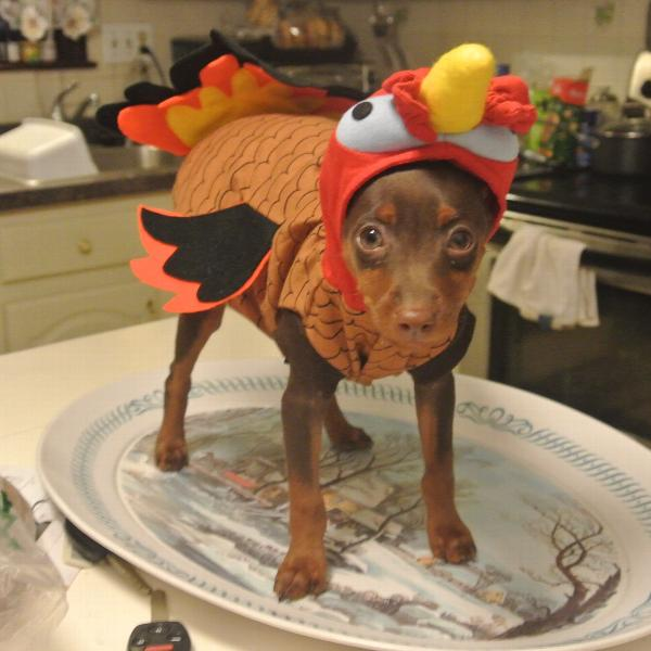 Best Turkey Dog Costume with Same Day Shipping | BaxterBoo DP02