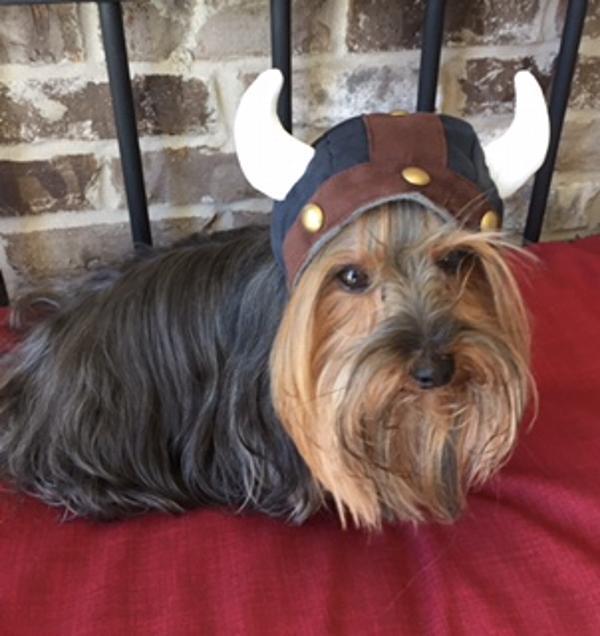Viking Helmet Dog Hat By Dogo Baxterboo