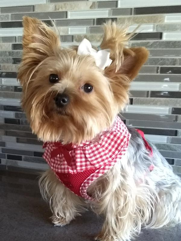 Puppia Vivien Harness Red Large