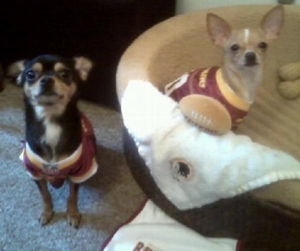 Washington Redskins Officially Licensed Dog J...  07b60f3f7