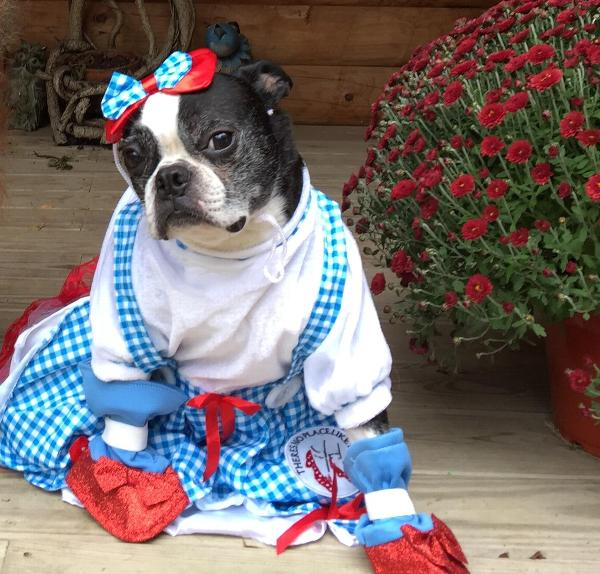 Pearl : wizard of oz dog costume  - Germanpascual.Com