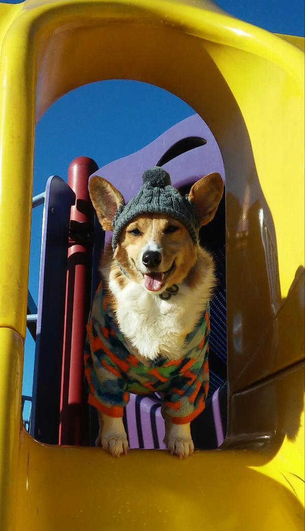 Worthy Dog Toboggan Dog Hat - Gray  9df1777182a