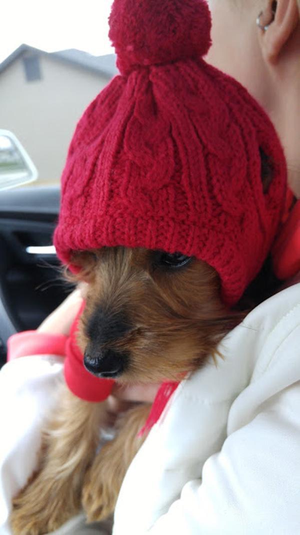 Worthy Dog Toboggan Dog Hat - Red  b751a482647