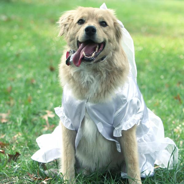 Yappily Ever After Dog Wedding Dress w/ Veil by East Side Collection ...