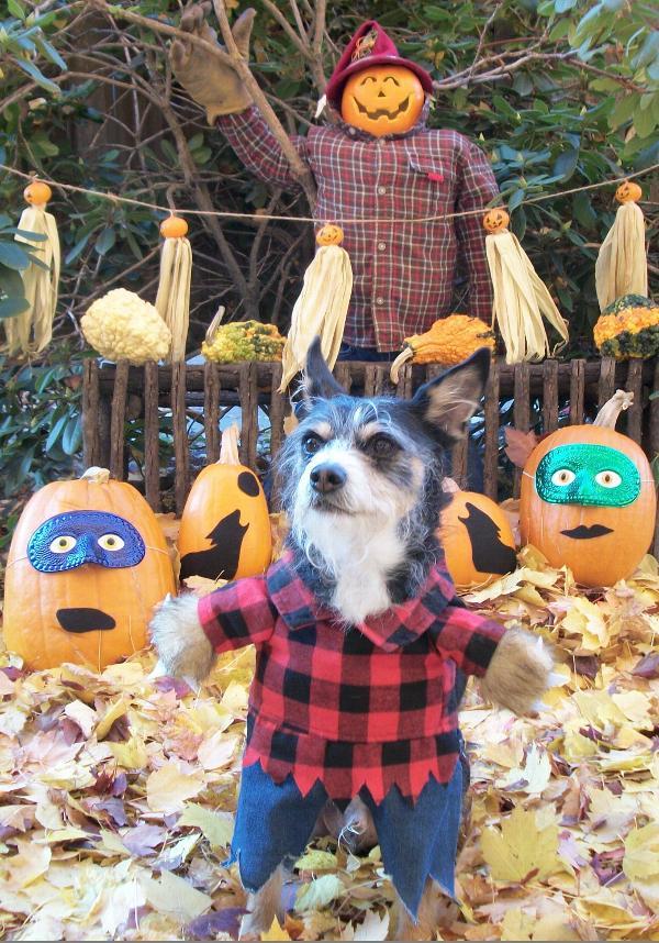 Zack And Zoey Werewolf Dog Costume Baxterboo