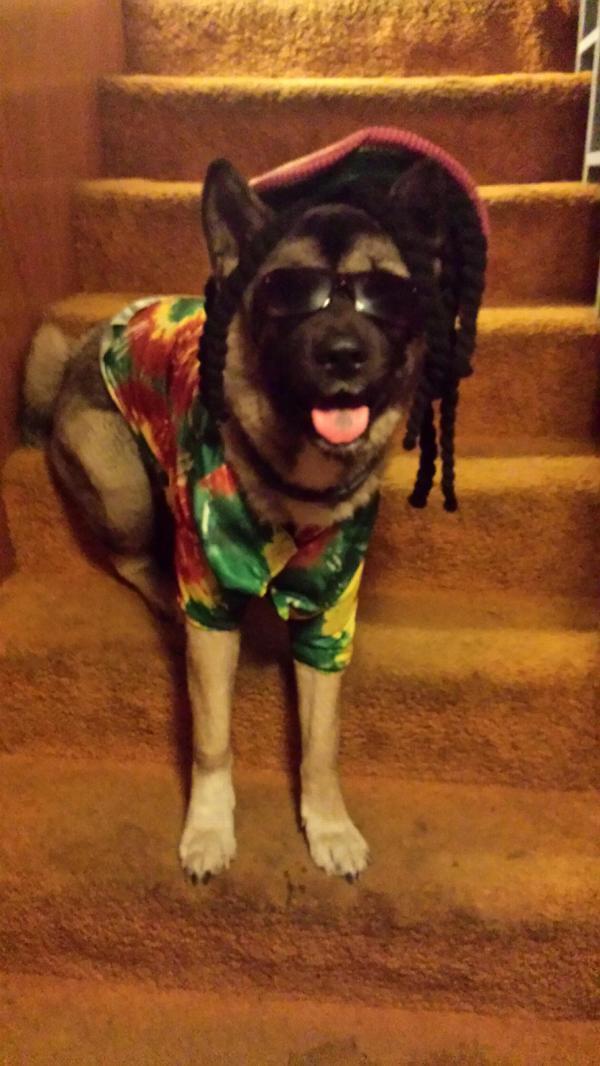 Zelda 70 S Rasta Halloween Dog Costume Baxterboo
