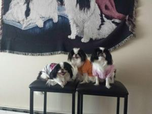 Harley ,Oreo and jasmine