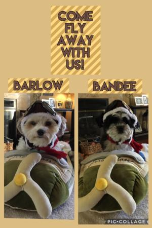 Barlow and Bandee