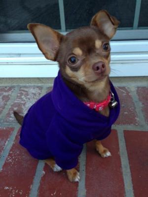 Barking Basics Dog Hoodie - Purple Customer Photos - Send us your photo!  Lani b6a16363f