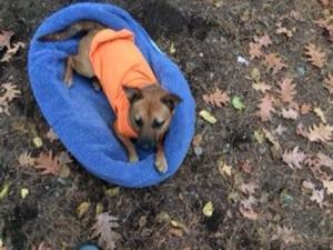 Keep Dog Warm Under Service Vest