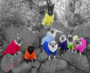 Pug Party Plus One - Zelda in Pink
