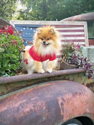 Basic Dog Hoodie - Tomato Red | BaxterBoo