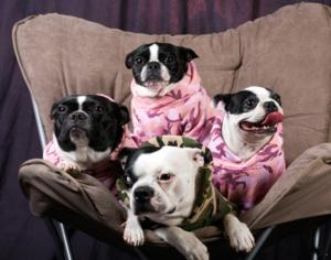 Diva, Muffy, Boston and Tessa