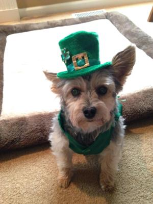 Leprechaun Dog Hat With Same Day Shipping Baxterboo