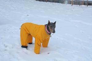 Muttluks Reversible Dog Snowsuit Review