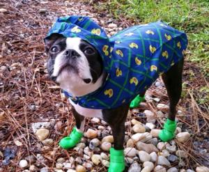 Pitter Patter Packable Dog Rain Poncho Rubb Baxterboo