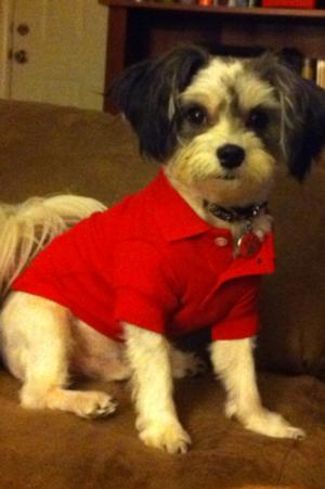 Polo Dog Shirt Tomato Red Baxterboo