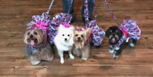 Mila, Fluffy, Pebbles and Nanita