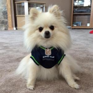 hot sale online cd22e 0f1d6 Seattle Seahawks Officially Licensed Dog Jersey - Green Trim