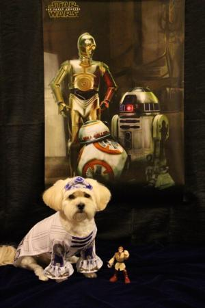 Star Wars R2 D2 Dog Costume Baxterboo
