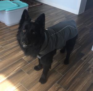 Ruffwear Sun Shower Dog Rain Jacket Review