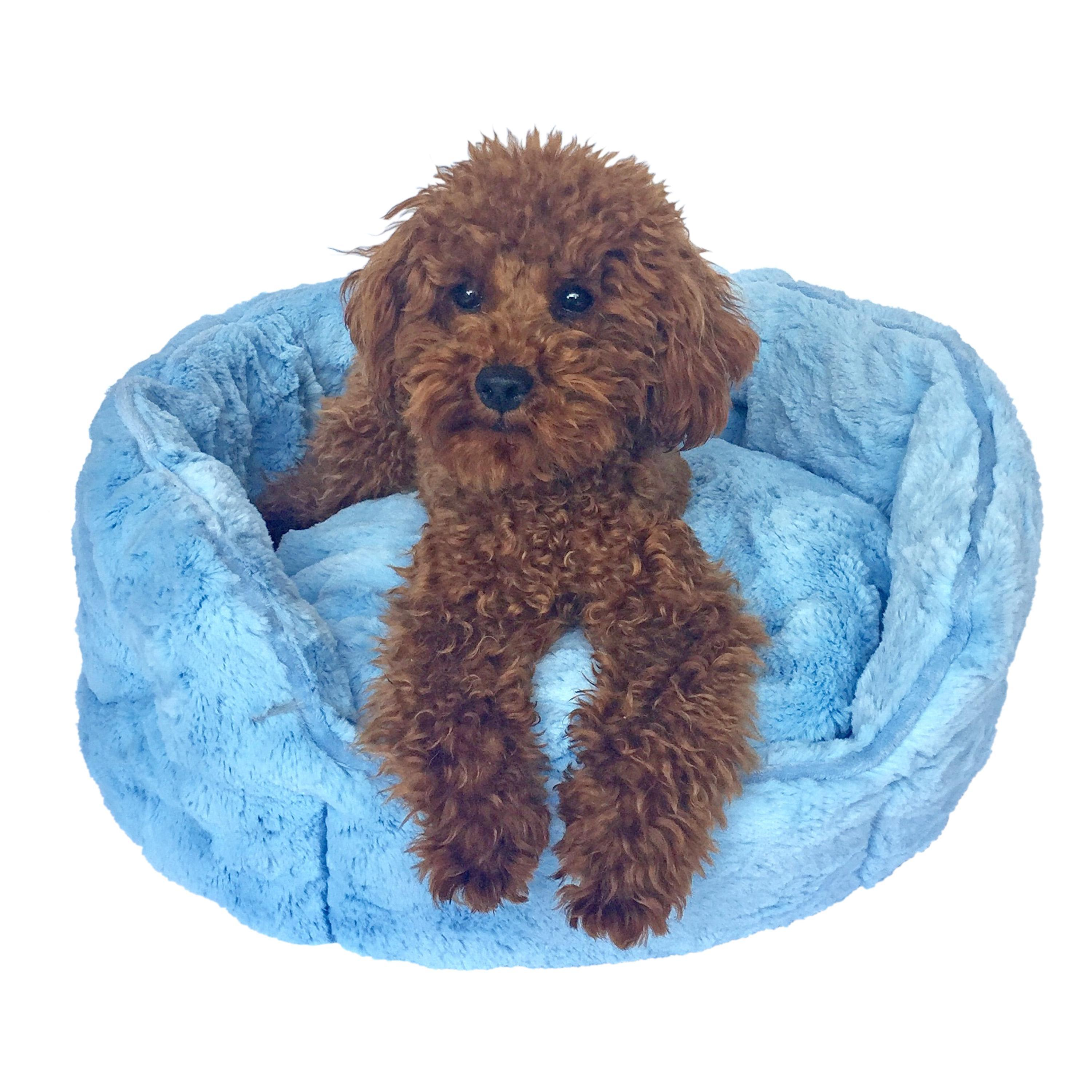 Shell Dog Bed by The Dog Squad - Light Blue