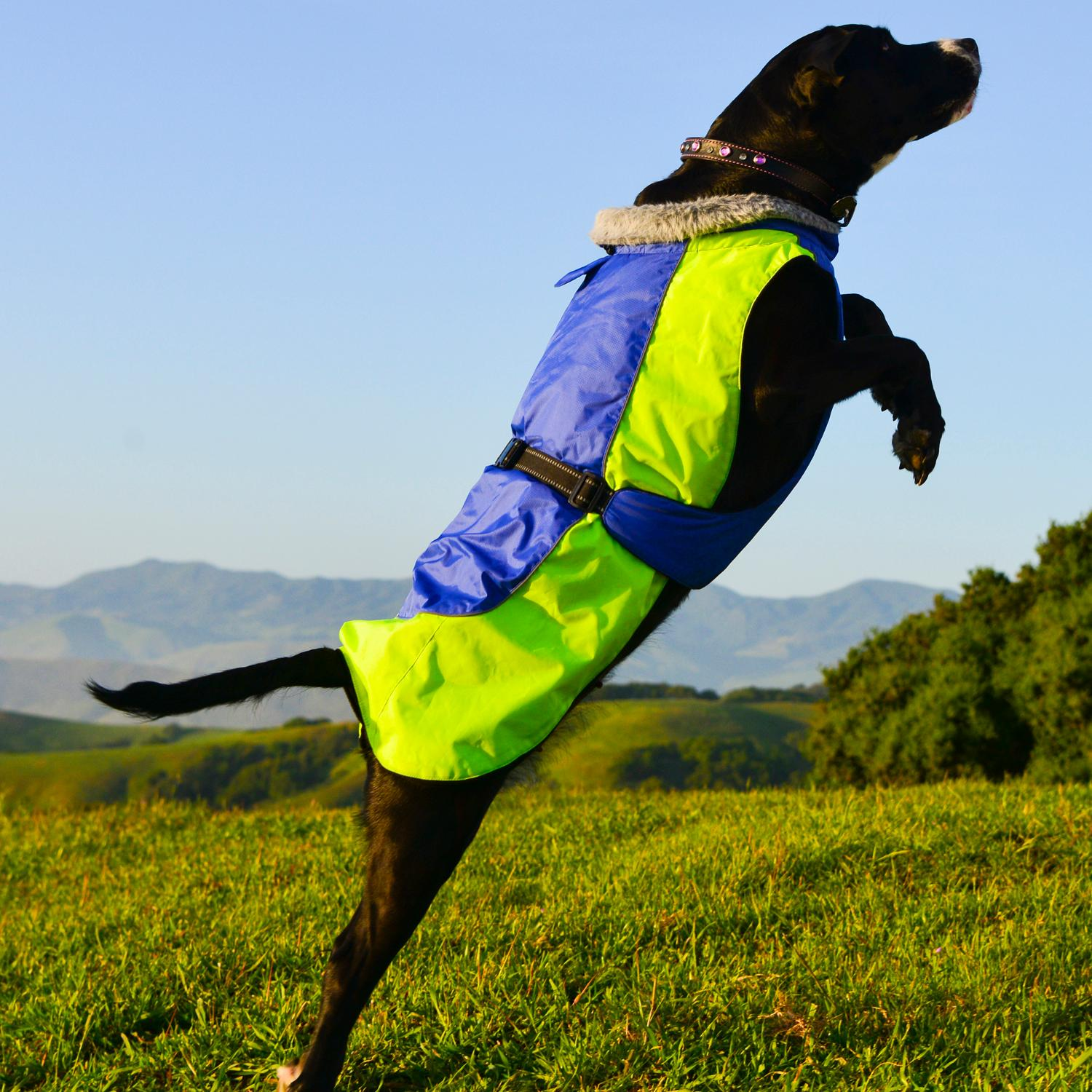 Alpine All-Weather Dog Coat by Doggie Design - Blue and Green