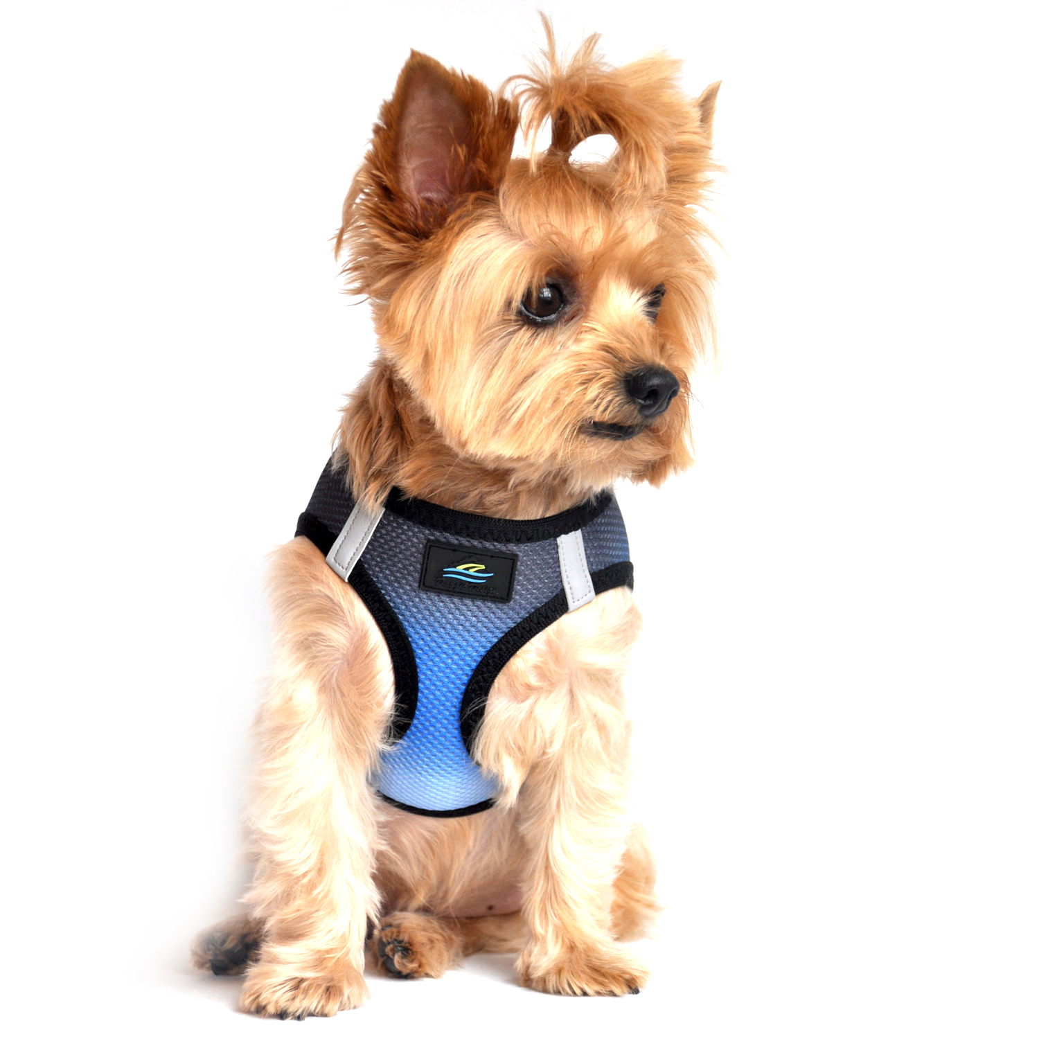 American River Choke-Free Dog Harness by Doggie Design - Midnight Sky Ombre