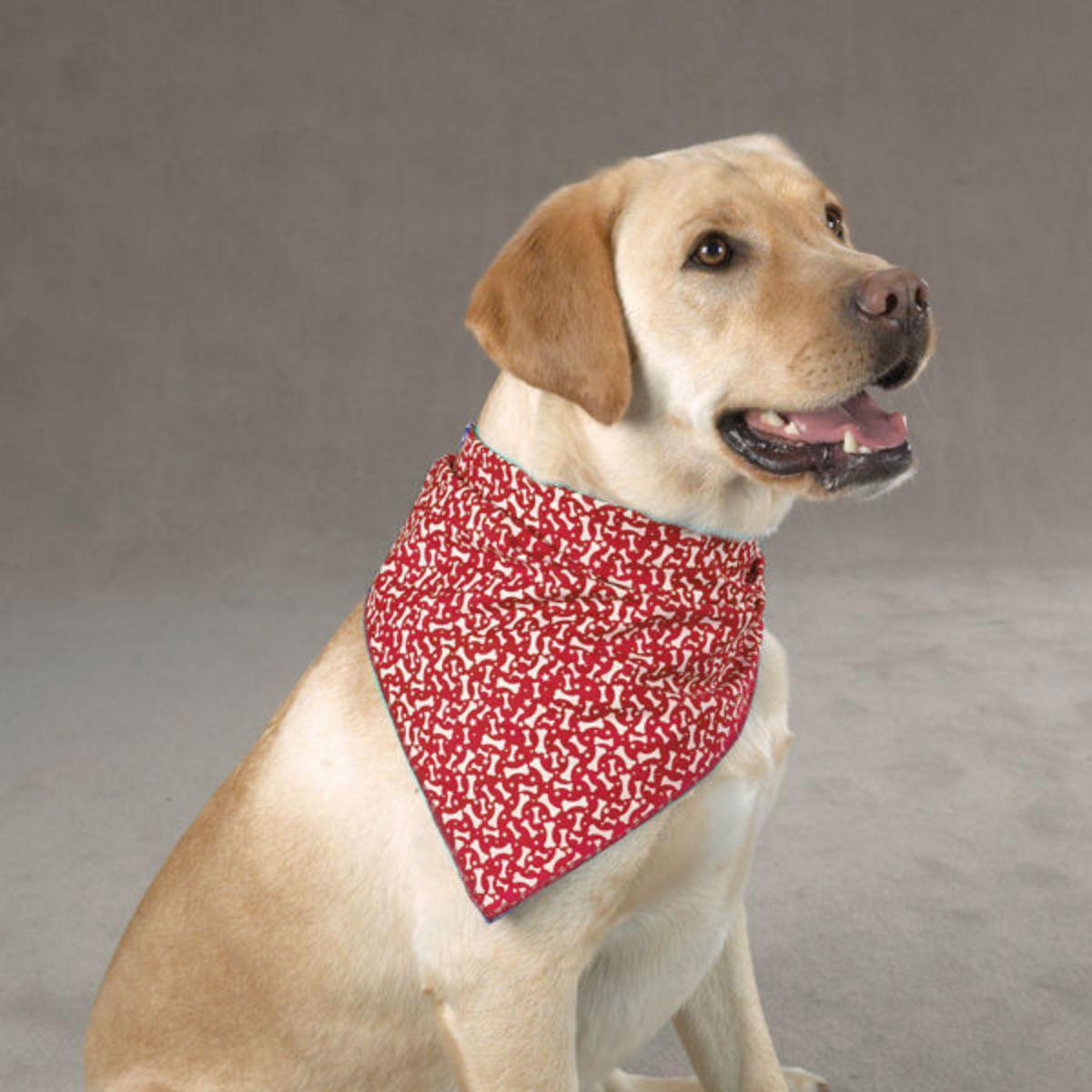 Aria Blue Ribbon Bone Dog Bandana - Red