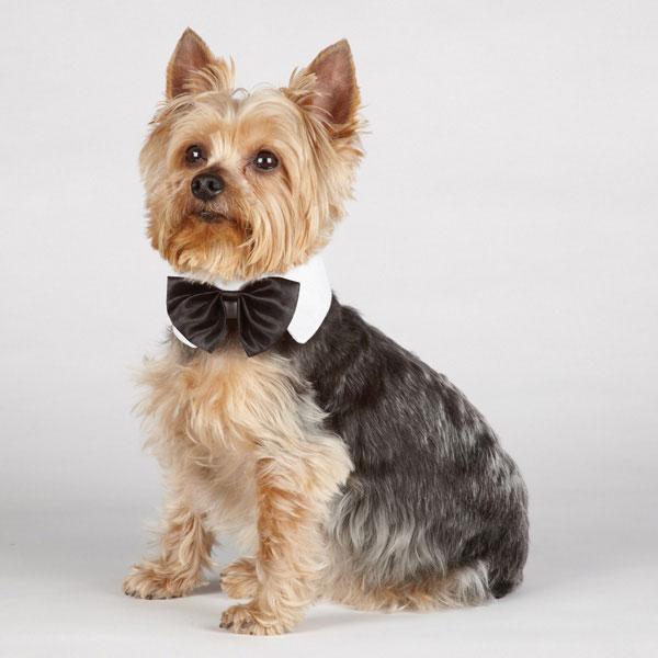 Aria Canine Royale Dog Bowtie - Black Satin