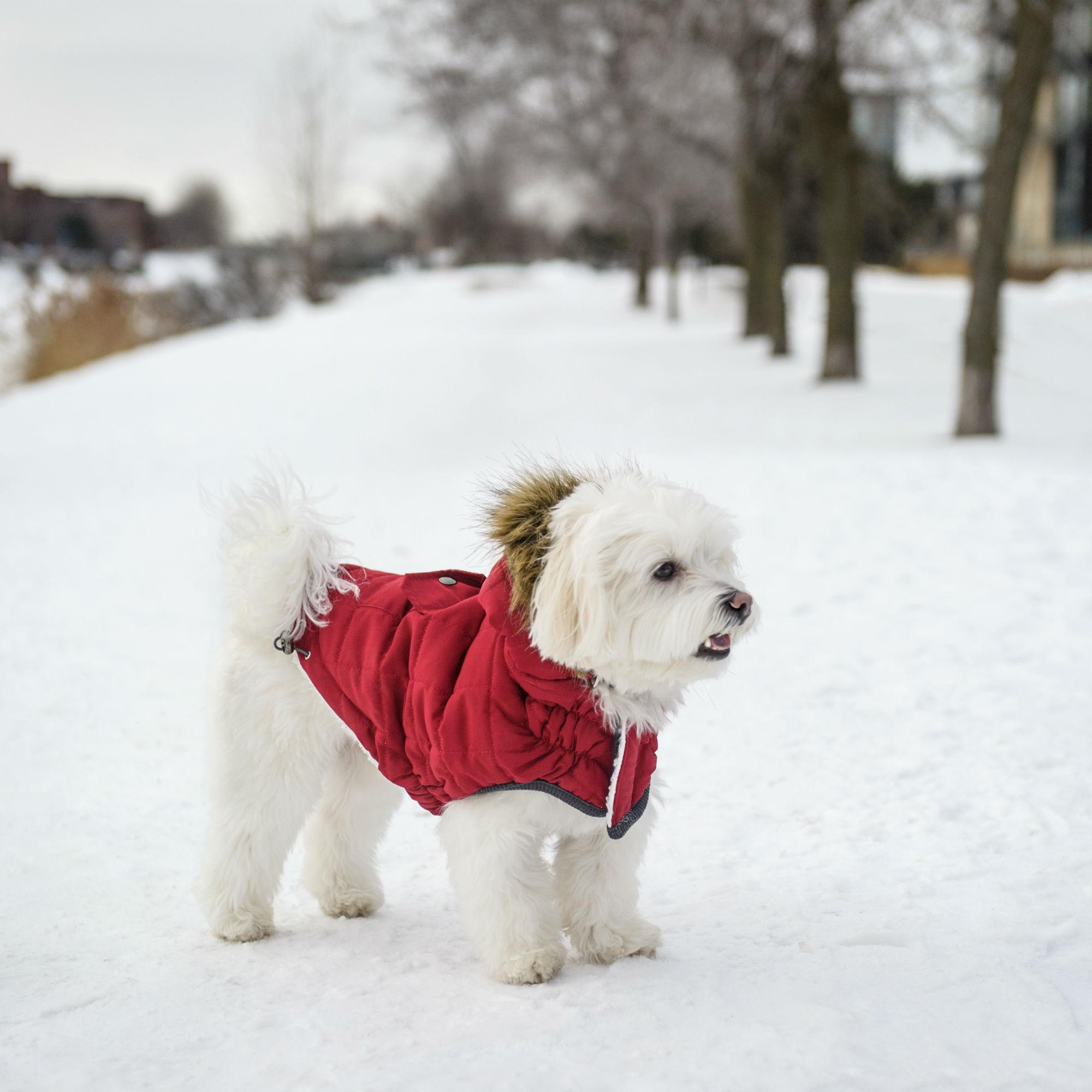 Aspen Elasto-Fit Dog Parka - Flame Red