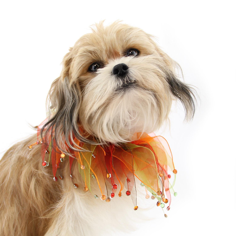 Autumn Rhinestone Dog Neck Scrunchy