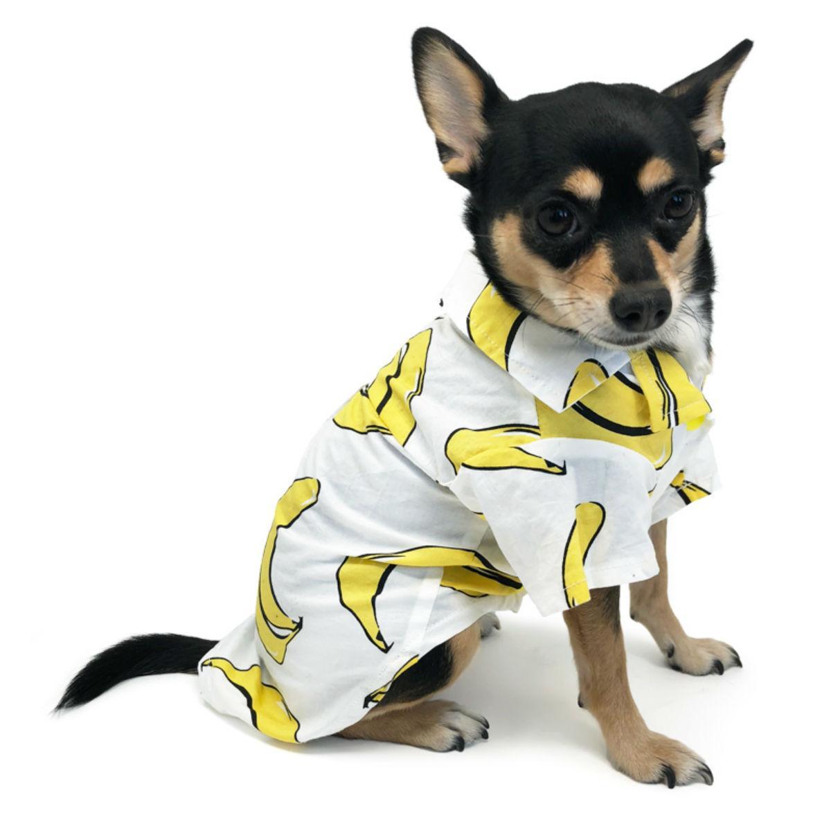 Banana Collared Dog Shirt by Dogo