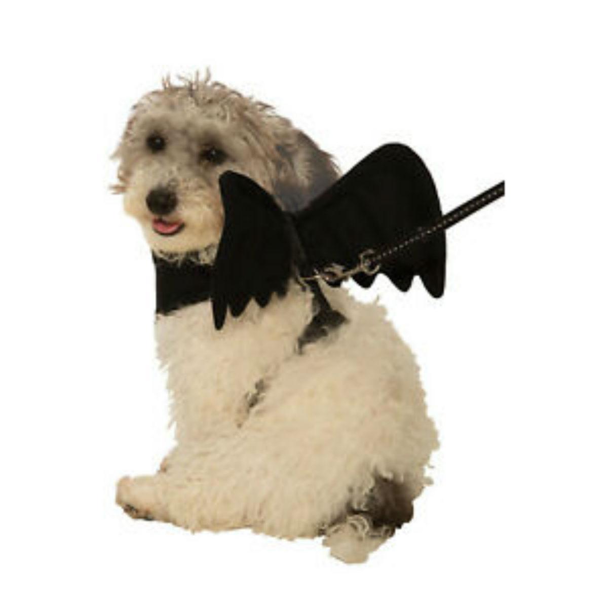 Bat Wing Dog Harness Costume - Black