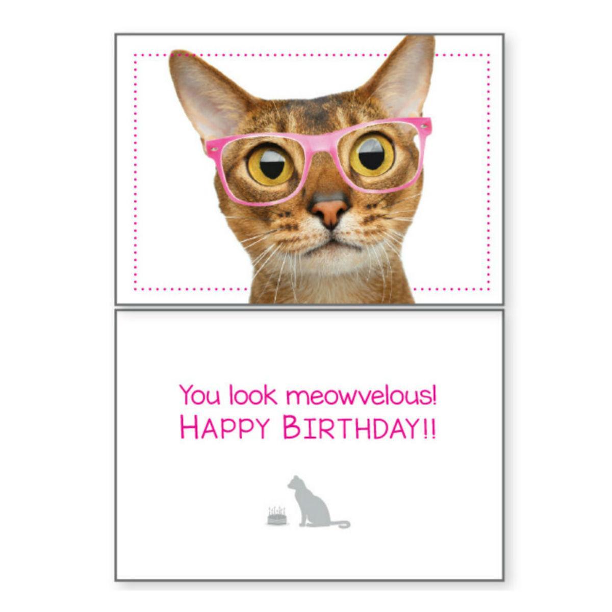 Birthday Greeting Card by Dog Speak - You Look Meowvelous