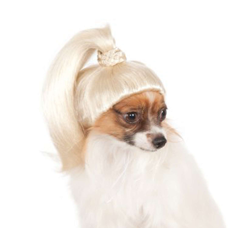 Blonde Ponytail Dog Costume
