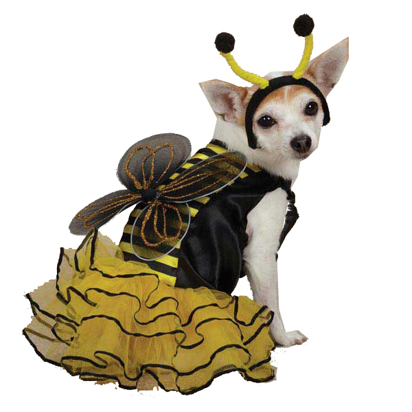 Bee Dog Halloween Costume with Same Day Shipping | BaxterBoo